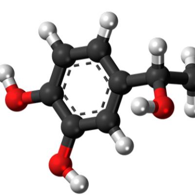The-Protein-Expression-nywv3merzj5376gzhq3uuefh4dimlj23ksbi5m9cww